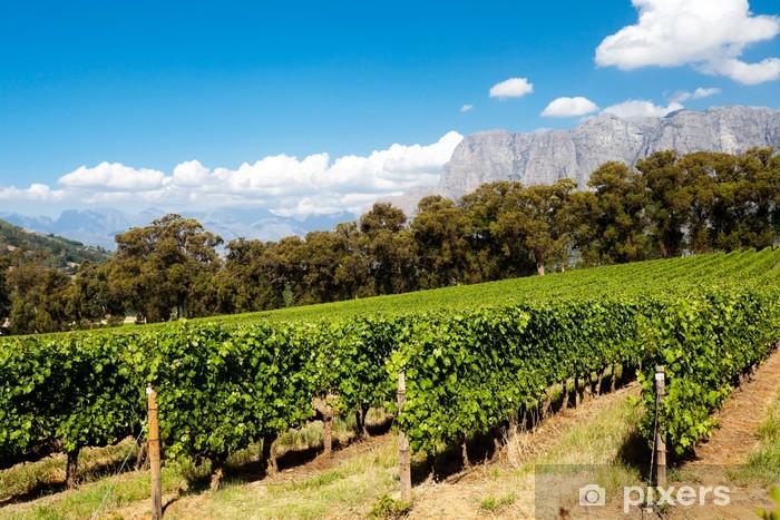 Naklejka Pixerstick Winnica w Stellenbosch, Cape Town, Republika Południowej Afryki - Afryka