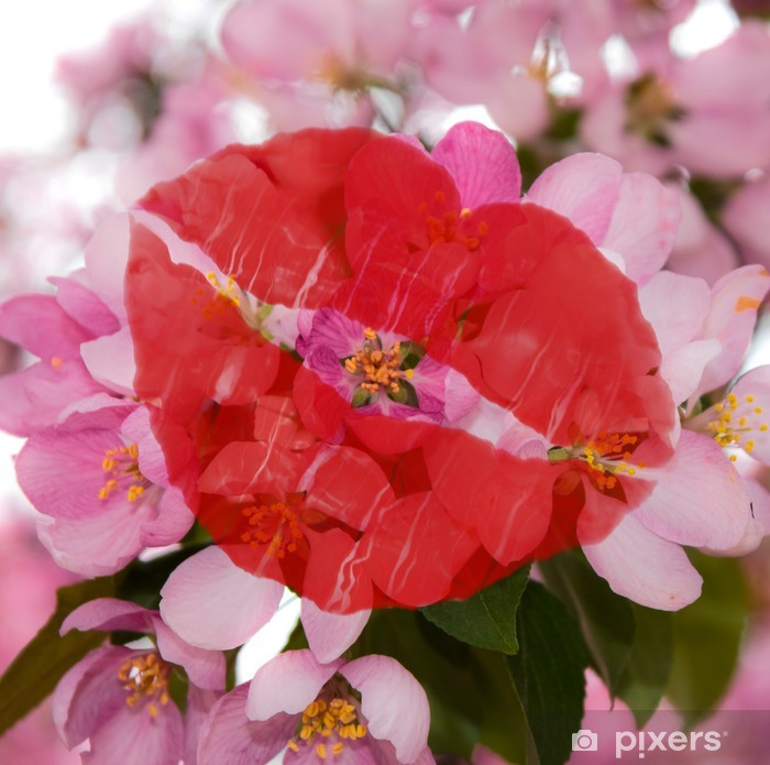 Poster Rosa Kirschblüten. - Blumen