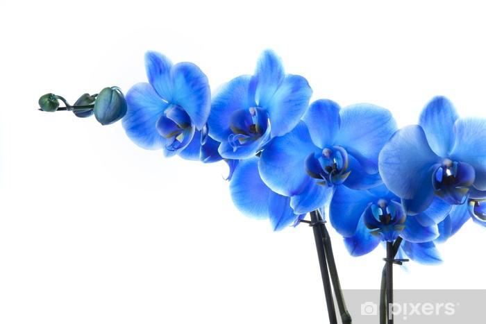 Sticker Orchidée bleue • Pixers® - Nous vivons pour changer