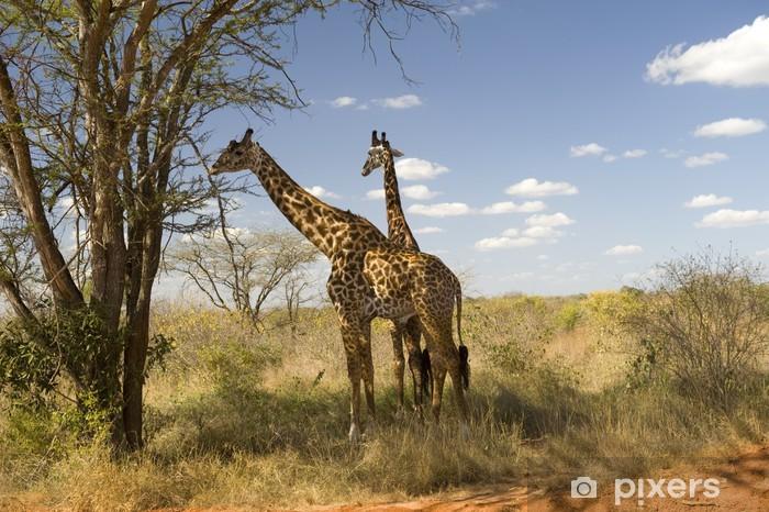 Vinylová fototapeta Žirafy, Národní park Amboseli - Vinylová fototapeta