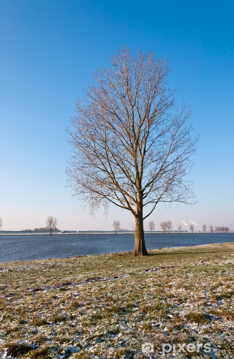 Vinyl-Fototapete Bare einsamer Baum auf einem Flussufer in den Niederlanden - Traurigkeit