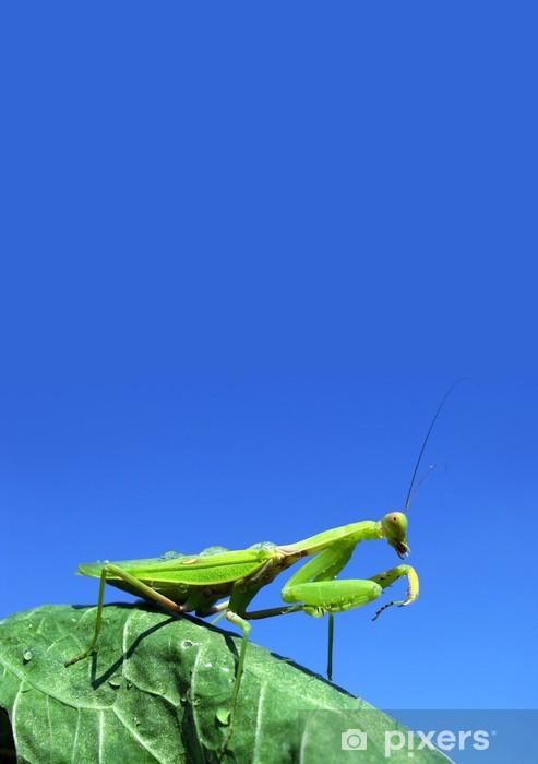 Vinyl-Fototapete Green mantis - Andere Andere