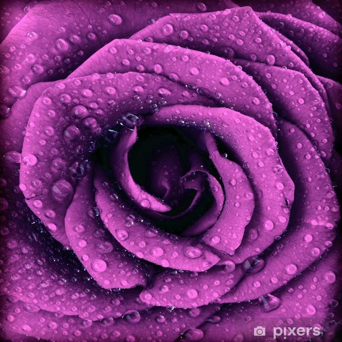 Purple dark rose background Pixerstick Sticker - Themes