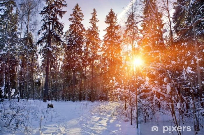 Papier peint vinyle La forêt d'hiver sous la neige en journée ensoleillée - Saisons