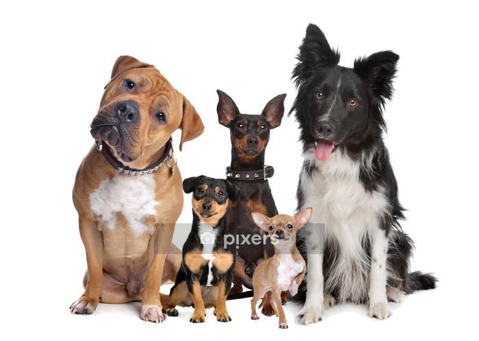 Naklejka na ścianę Grupa pięciu psów - Naklejki na ścianę