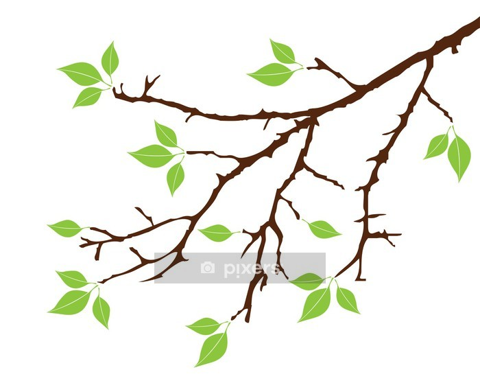 Vector tree branch with green leaves Wall Decal -