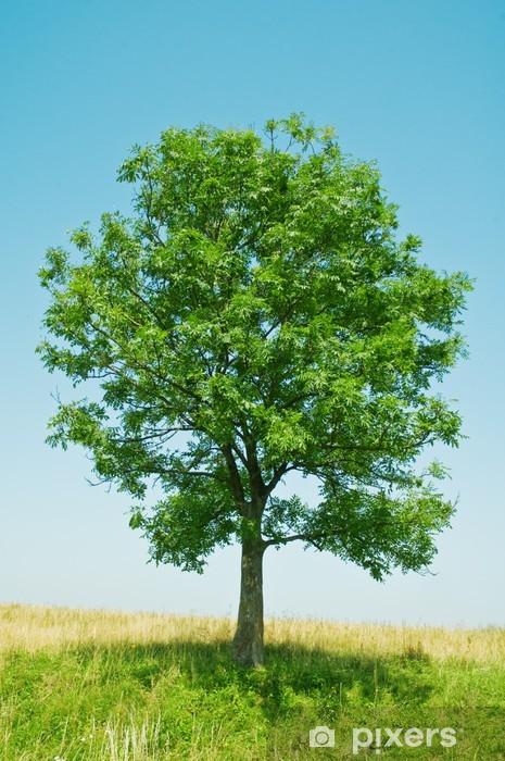 Vinil Duvar Resmi Ağaç - Ağaçlar