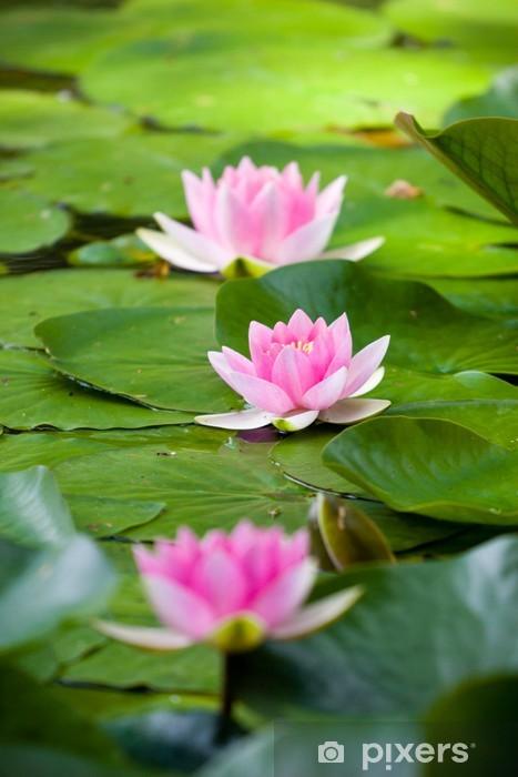 Water lily Pixerstick Sticker - Flowers