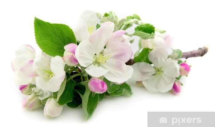 Naklejka Pixerstick Kwiaty jabłoni - Pory roku