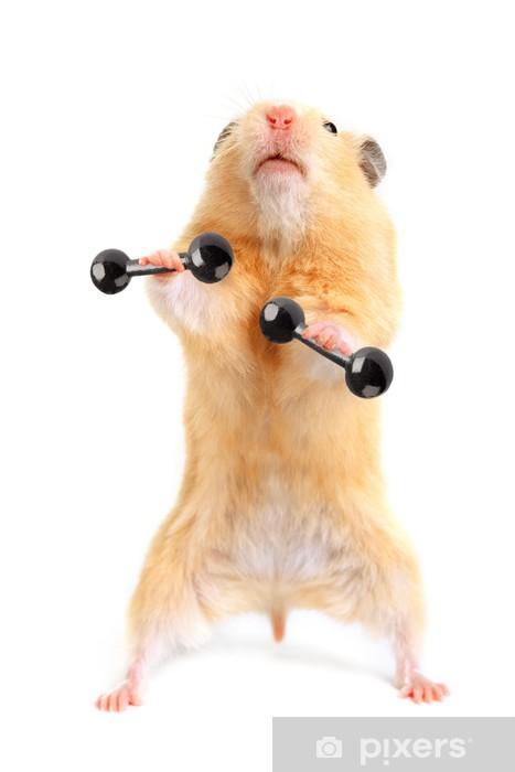 hamster im arschloch