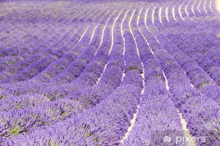 Vinyl-Fototapete Lavendelfeld, Plateau de Valensole, Provence, Frankreich - Themen