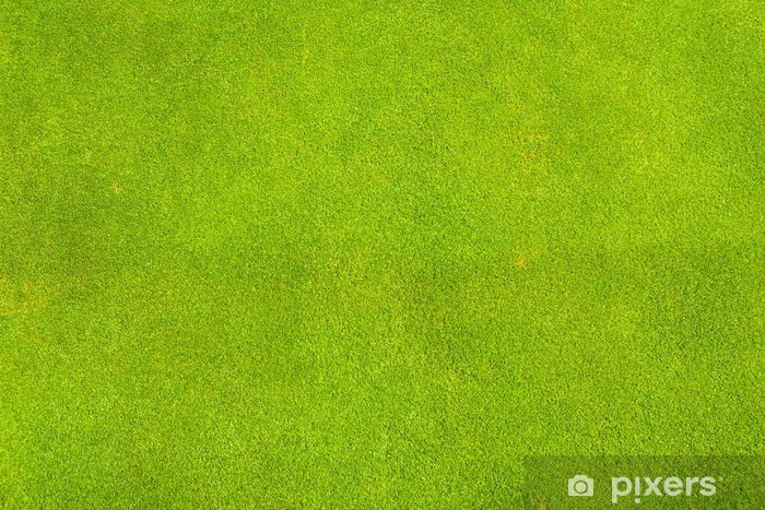 Perfect Green Grass Texture From Golf Field Wall Mural