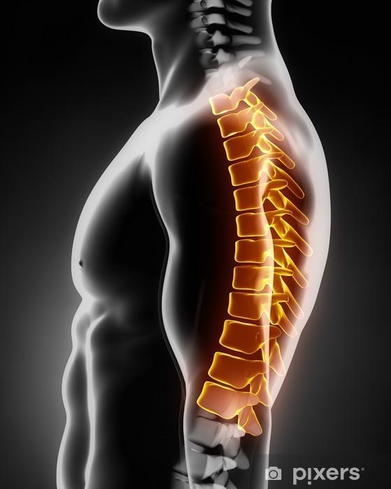 Fotomural Estándar Anatomía de la columna torácica lateral izquierda - Salud y medicina