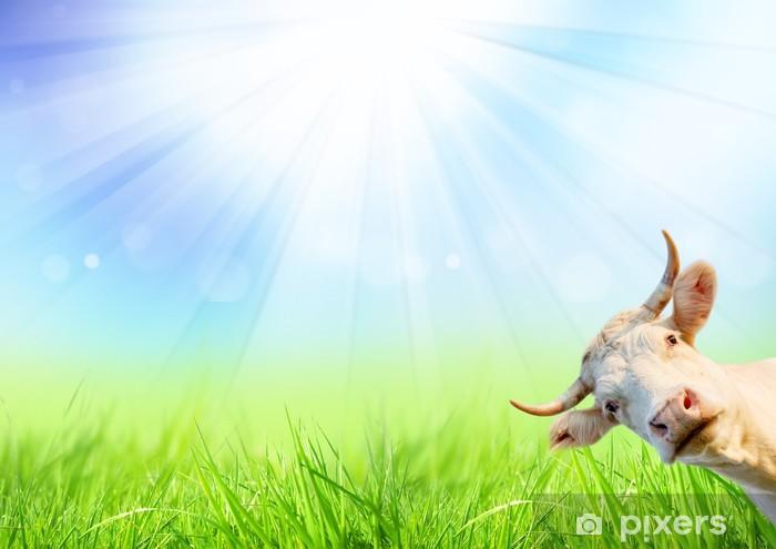 Sticker Pixerstick Curieux de vache sur la prairie au printemps - Saisons