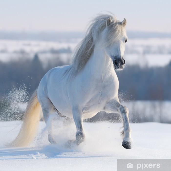 Pixerstick Dekor Snabbt växande vit häst - Teman