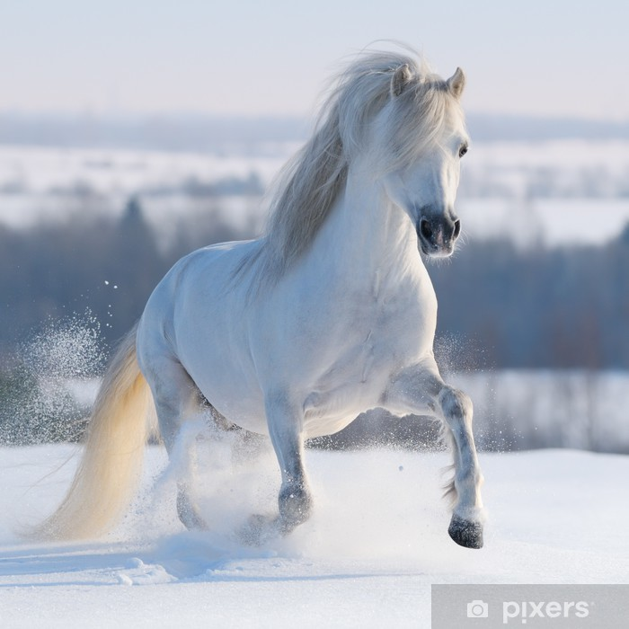 Galloping white horse Pixerstick Sticker - Themes