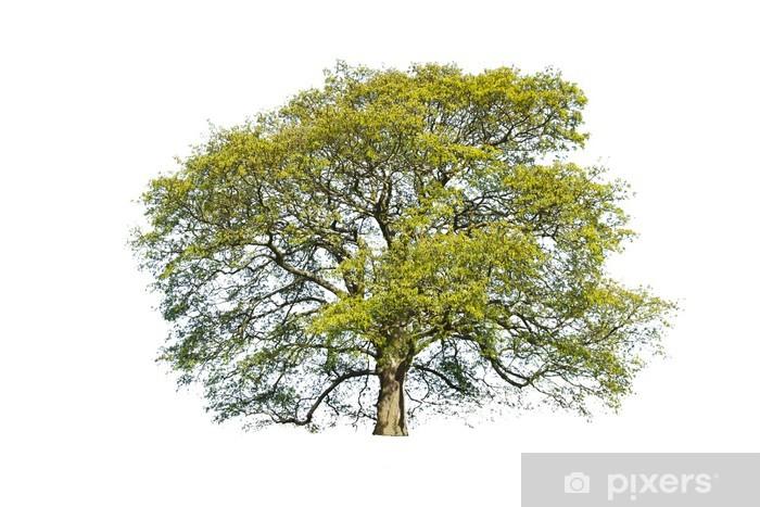 Fototapeta winylowa Drzewo, lato, izolowanych - Sporty na świeżym powietrzu