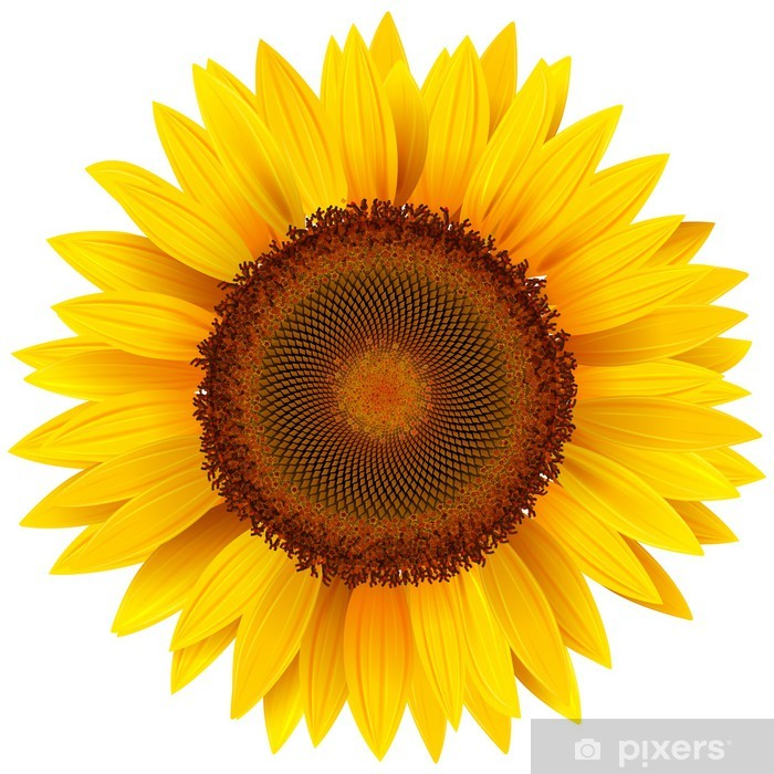Vector sunflower. Wall Mural • Pixers® - We live to change