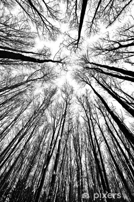 Fototapeta winylowa Białe i czarne sylwetki drzew - Style