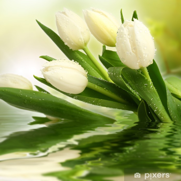 white tulips Poster - Themes