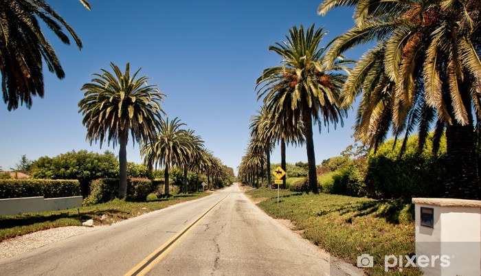 Fototapeta winylowa Palm drogi w Santa Barbara - Cuda natury
