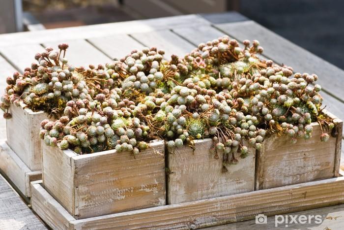 Nálepka Pixerstick Dřevěné bedny s Sempervivum rostlin - Roční období