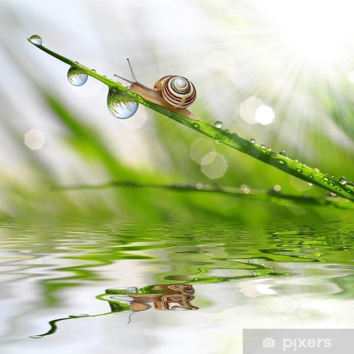 Sticker Pixerstick Escargot sur l'herbe humide de rosée - Autres Autres