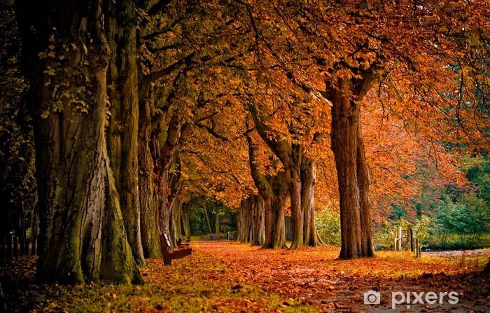 Pixerstick Sticker Herfst kleuren in het bos - Thema's