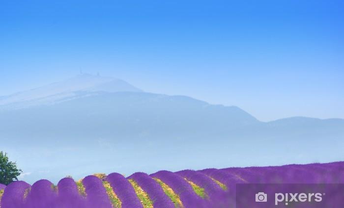 Naklejka Pixerstick Lavender u podnóża Ventoux - Rolnictwo