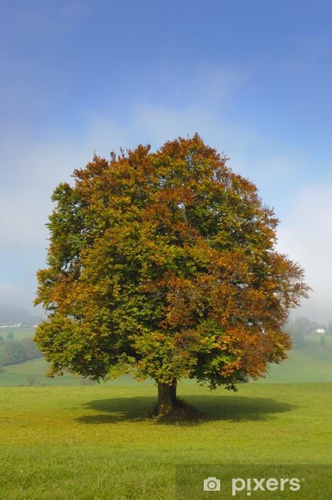Fototapete Baum Buche Pixers 174 Wir Leben Um Zu Ver 228 Ndern