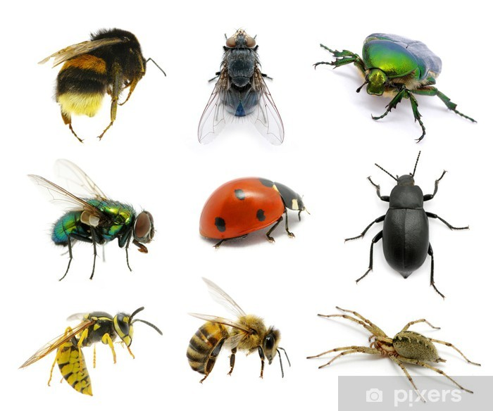 Set of insects Framed Poster - Other Other