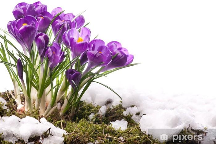 Nálepka Pixerstick Umění Krásné jarní květiny - Roční období