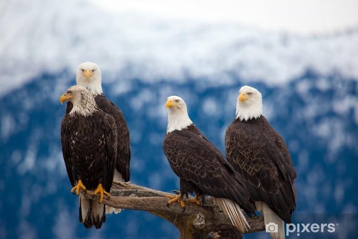 American Bald Eagles Pixerstick Sticker - Themes