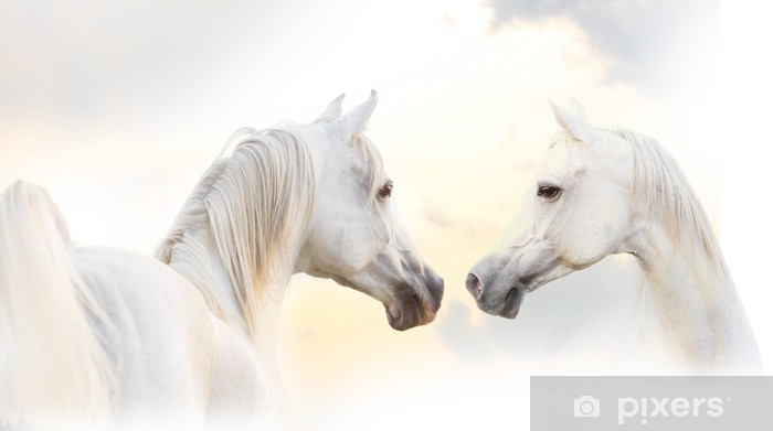 Pixerstick Dekor Arabisk vit häst - Teman