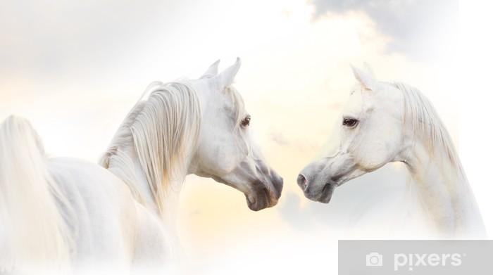 Fototapeta samoprzylepna Arabian biały koń - Tematy