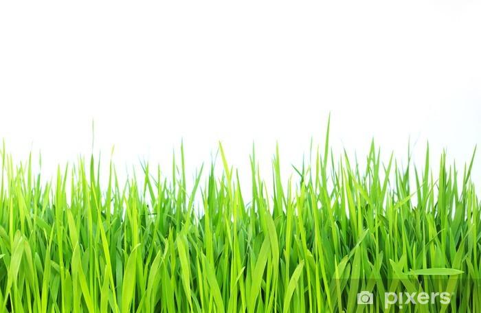 Fototapeta winylowa Zielona trawa - Przeznaczenia
