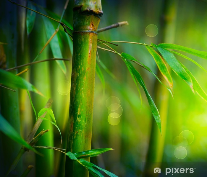 Papier peint vinyle Bambou - Styles