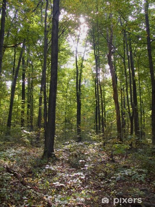 Appalachian Trail Vinyl Wall Mural - Forests