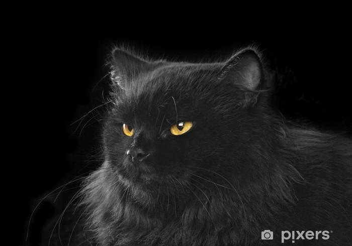 Fototapeta Czarny Kot Perski Na Czarnym Tle Pixers żyjemy By