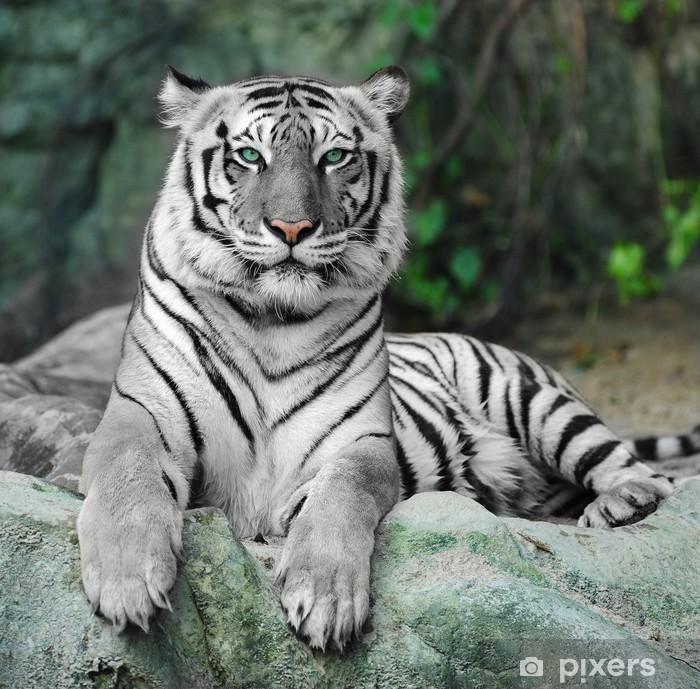 Fototapeta winylowa Biały tygrys na skale w zoo - iStaging
