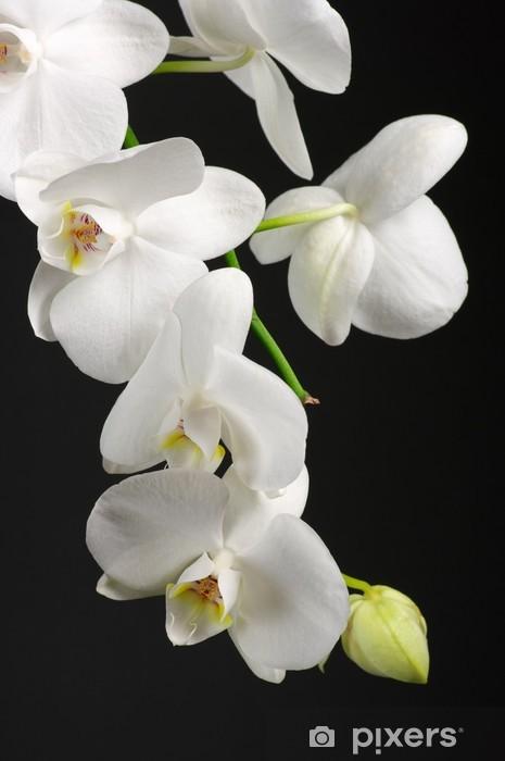 Papier peint vinyle Orchidee branche - Thèmes