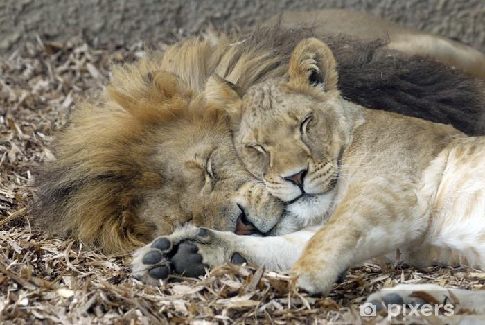Sticker Pixerstick Lion et lionne dormir - Thèmes
