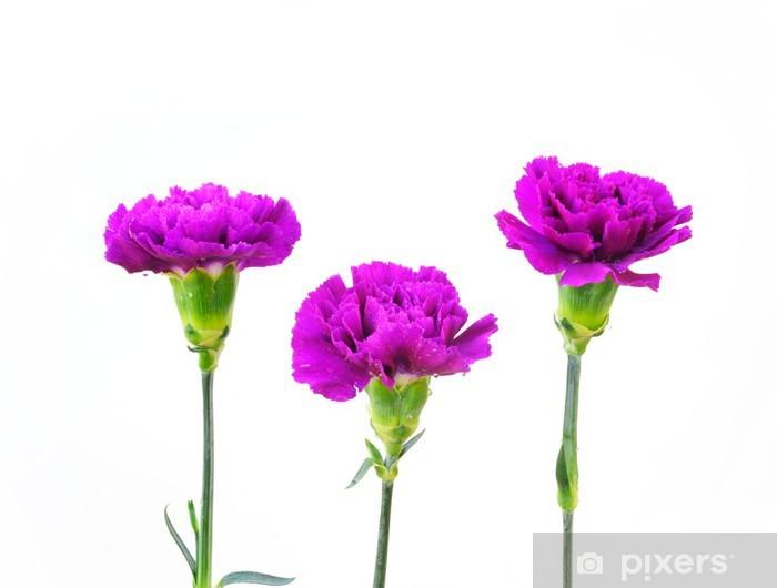 Vinyl-Fototapete Eine Reihe von Carnation Blumen auf weißem Hintergrund - Blumen