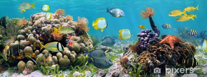 Vinilo Pixerstick Panorámica de arrecife - Arrecife de coral