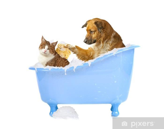 Katzenwäsche Hund Und Katze In Der Badewanne Wall Mural Pixers
