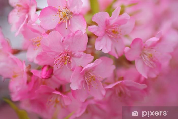 Nálepka Pixerstick Kawazu Sakura - Květiny