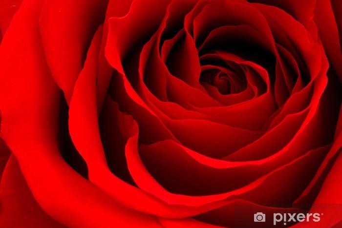 Papier peint vinyle Red rose - Thèmes