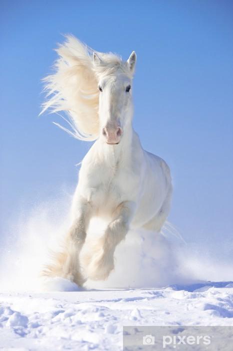 White horse stallion runs gallop in front focus Pixerstick Sticker - Themes