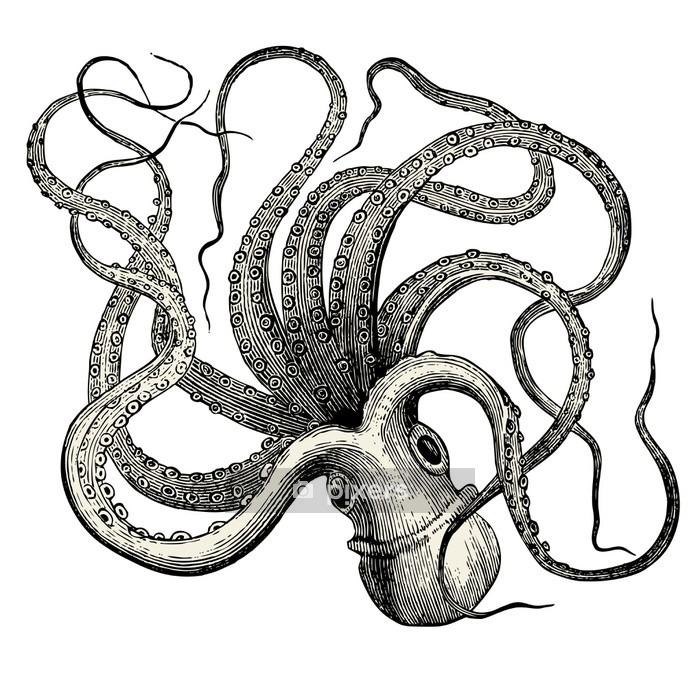 Pieuvre (Octopus vulgaris) Wall Decal - Wall decals