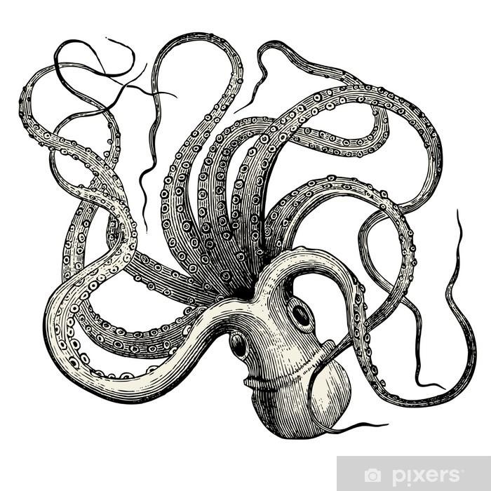 Sticker Pieuvre (Octopus vulgaris) • Pixers® - Nous vivons ...